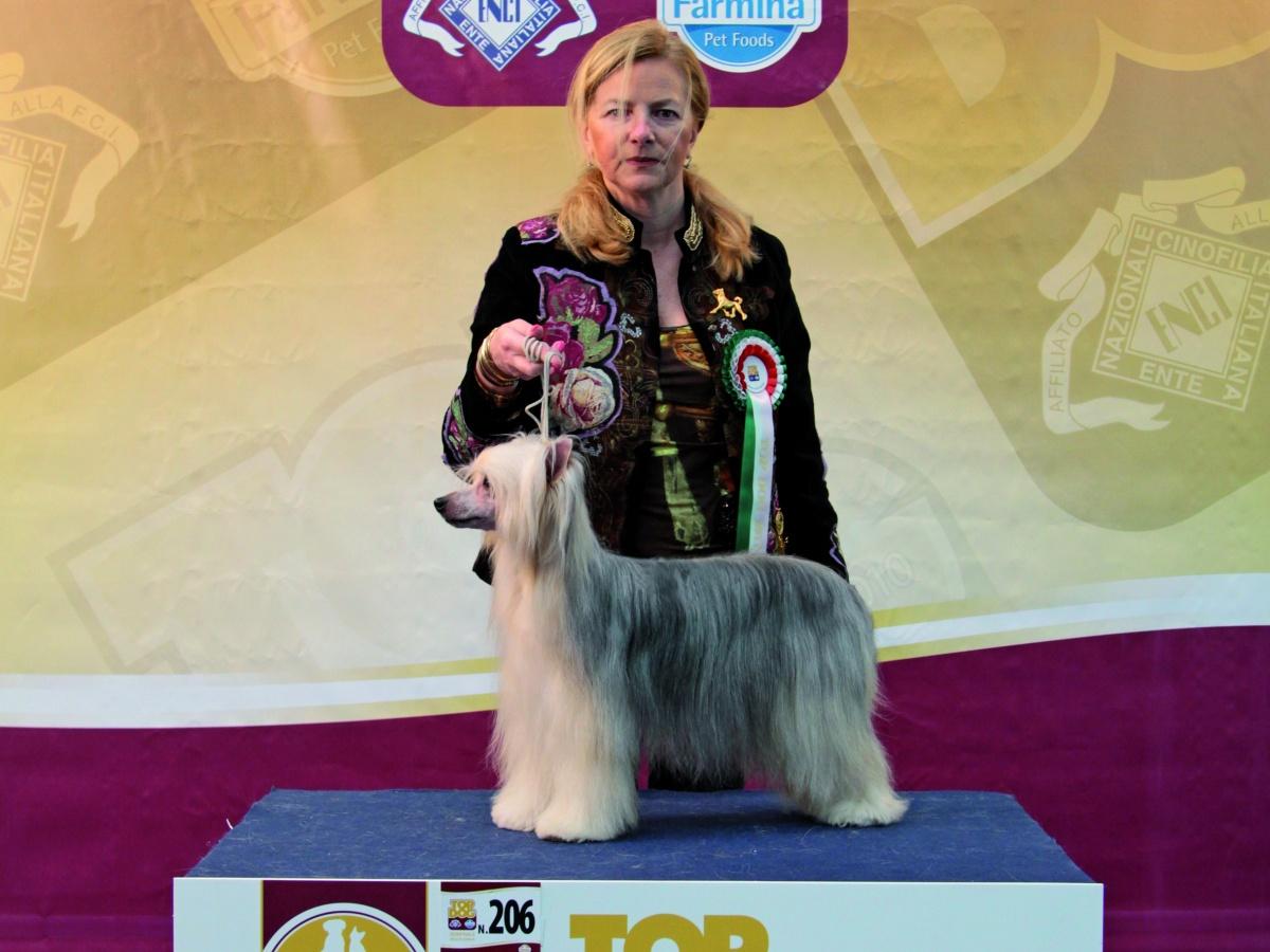 TOP DOG 2011